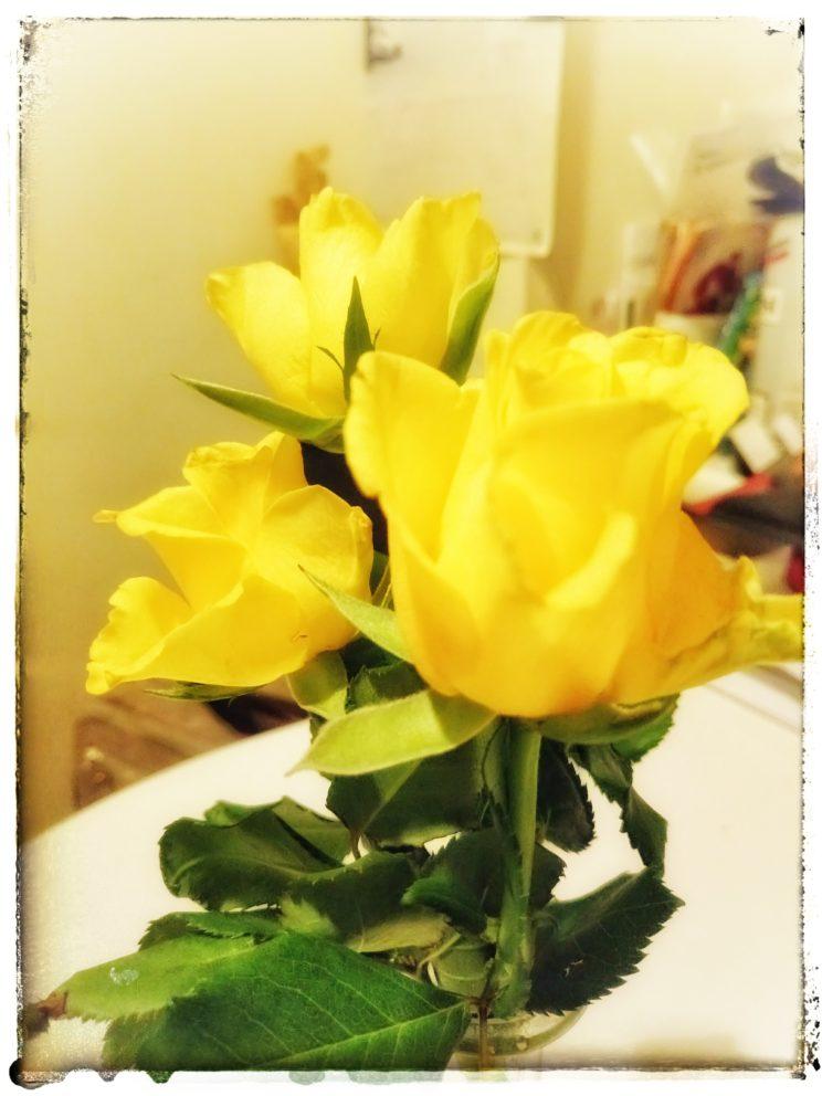 Rosen für die Damen